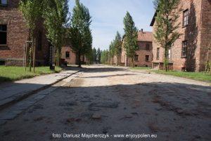 svensk_guide_Auschwitz